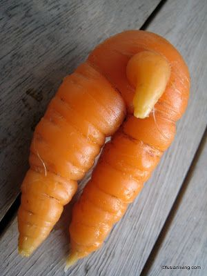 Strange looking carrot I dug up has two legs and a .... (!) Oh my!!! | Fusian Living