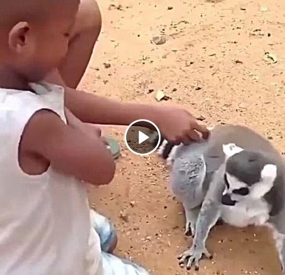 Lemure pede mais carinho.