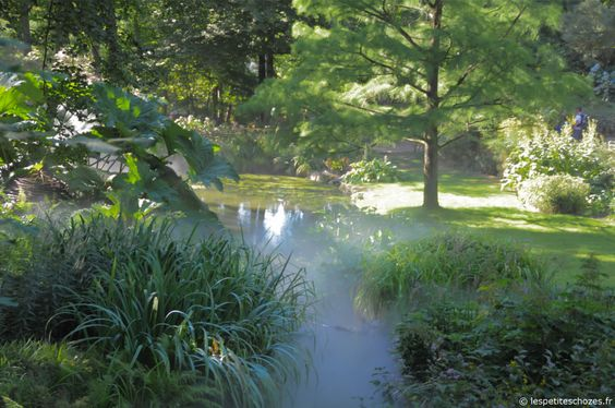 chemin, sous-bois, étang