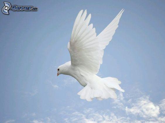 colombe, ailes, vol, ciel bleu