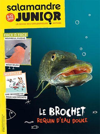 Le brochet, requin d'eau douce (n°104)