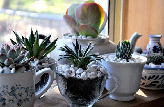 A maioria das mulheres ama ter um espaço reservado em casa para as suas plantinhas! Se você faz parte desse grupo, mas não tem espaço para ter uma horta e