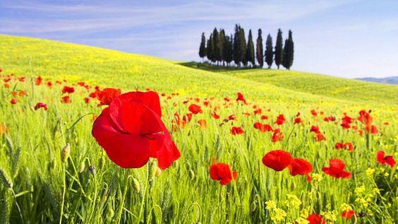 Google Image Result for http://4.bp.blogspot.com/_TYJEEAQGSLo/TPPEtxx_6fI/AAAAAAAABGg/utswvJubsCM/s1600/Tuscany_Italy%252B%25252810%252529.jpg