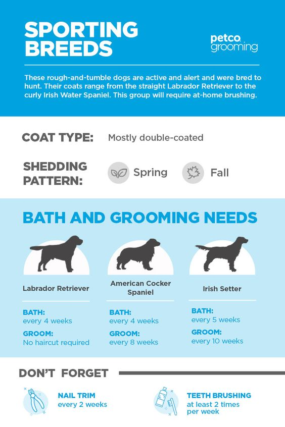 High Energy Sporting Breeds Deserve A To Be Pampered Too See How