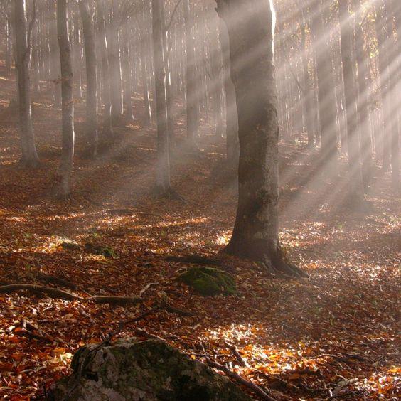 Árvores 2048x2048 papel de parede, madeira, outono, folhas, gravetos, sol, raios, luz