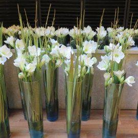weiße Amaryllis - Blüten - Eventdekoration