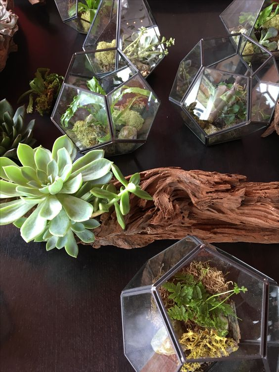 Terrariums, and driftwood, and succulents, OH MY!