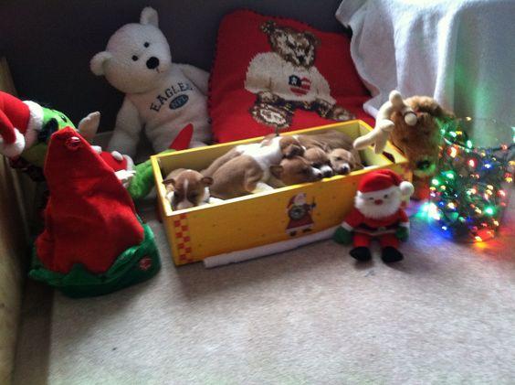 Box of puppy's