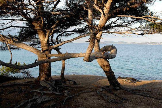 Photos de l' ile de Porquerolles -plage notre dame et la courtade - Les iles d'or - Christian ABEL photographe dans le Var - Livre de photos de l'ile de Porquerolles