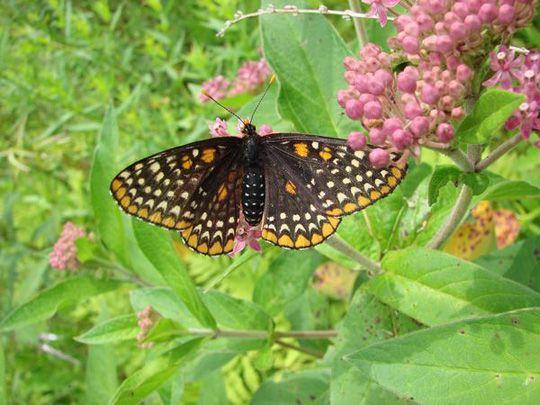 butterfly garden info