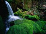 Rainforest Waterfall Walls of Jerusalem National Park, Tasmania, Australia