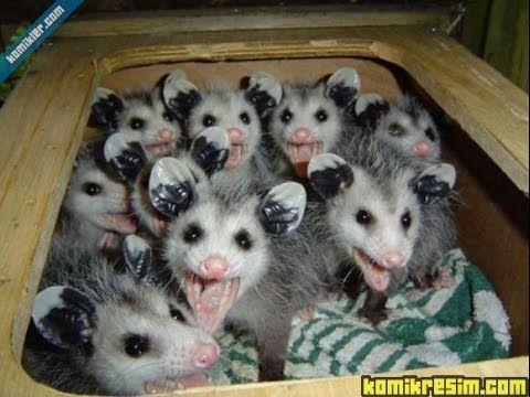 Hundreds of rats below the floor