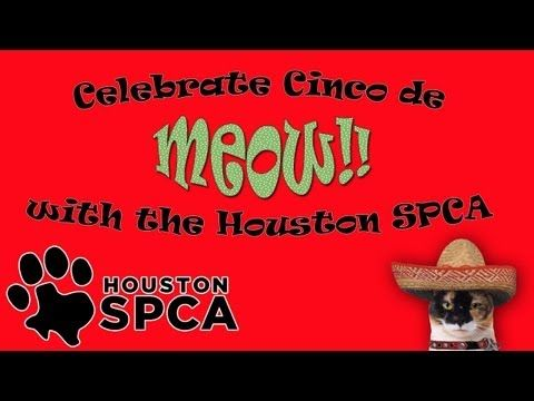 "Celebrate Cinco de Meow!!!  The Houston SPCA is having a feline fiesta this weekend and you're invited! Adopters will be able to take home any feline 5 months and older for just five dollars during our ""Cinco de Meow"" celebration! Learn more at www.houstonspca.org"