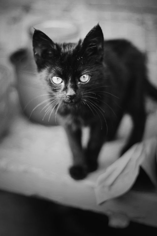 BCB- I wish more people would adopt black kitty's.. they are so gorgeous!