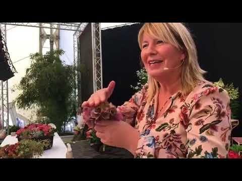 Hortensienerlebnisse Im Park 2018 Imke Riedebusch Live Youtube