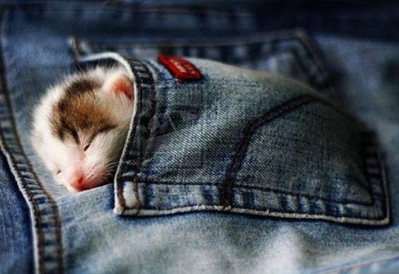 Awwww, pocket kitten !