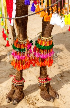 decorated camel foot in India Royalty Free Stock Photo