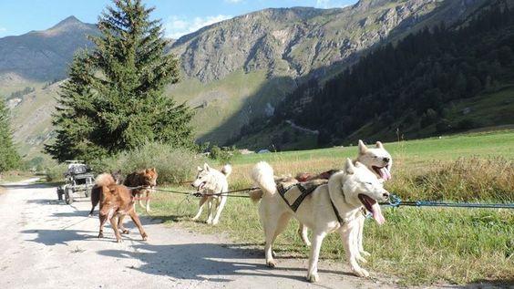 Pétition · Pour une restitutions des animaux aux propriétaires des chiens ! Saisie illégale de chiens de traineaux chez Nordic aventures · Change.org