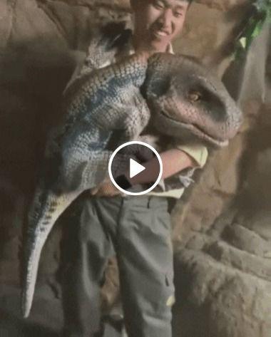 Filhote de dinossauro na indonésia.