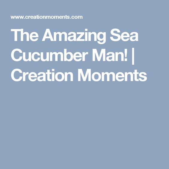 The Amazing Sea Cucumber Man! | Creation Moments