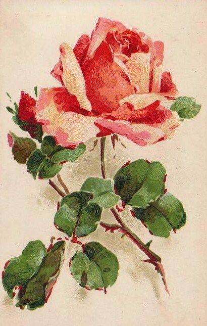 Vintage Images: Catherine Klein postcards: