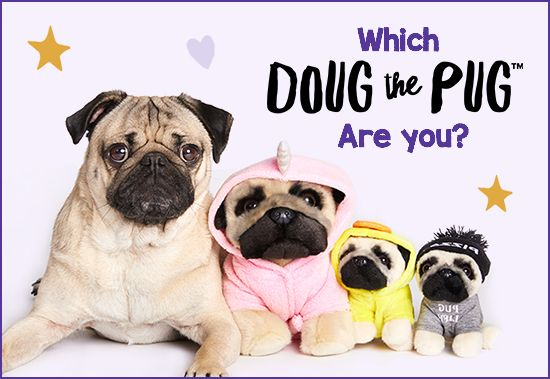 Which Doug The Pug Are You Quiz With Images Cute Pugs Doug