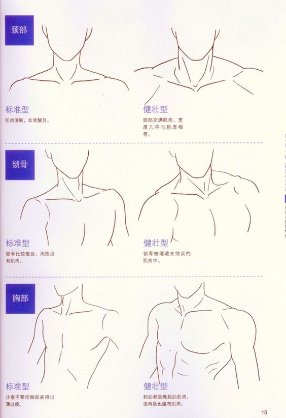 Neck and shoulders artist reference anatomy drawing for Cartoon body tutorial