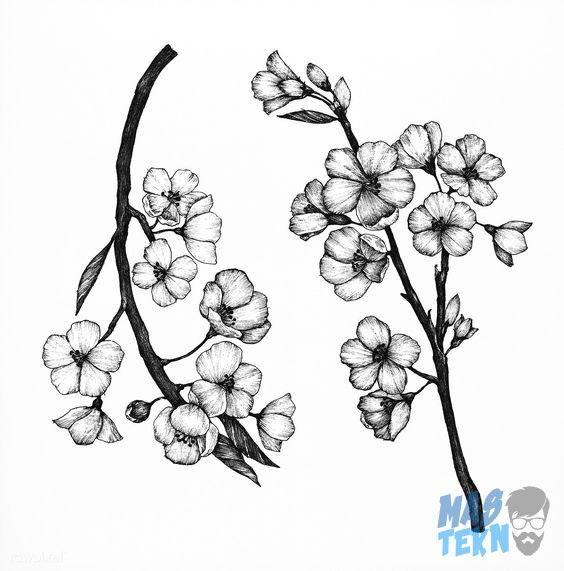 Paling Keren 25 Contoh Sketsa Gambar Bunga Sakura 40 Gambar Sketsa Bunga Indah Mawar Matahari Tulip Unduh 660 Gambar Sketsa Di 2020 Lukisan Bunga Bunga Sakura Bunga