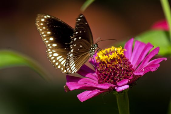 What Kind of Flowers Attract Butterflies?