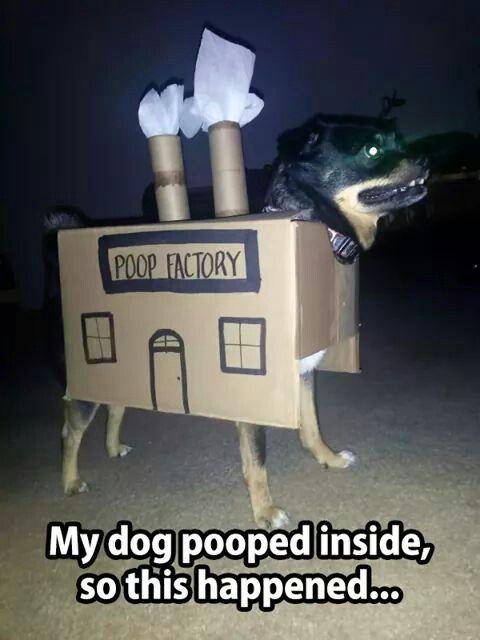 Poop factory