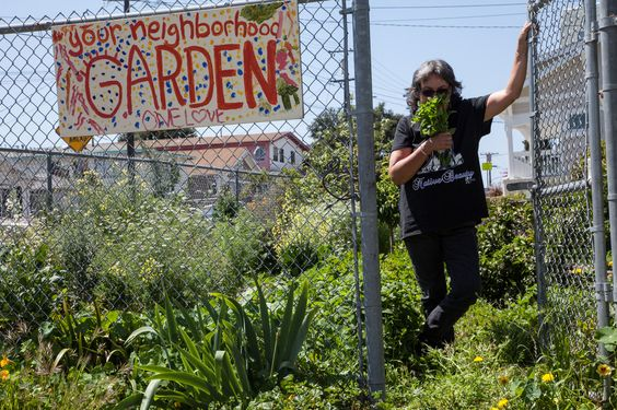 Last month I worked on a story for Oakland magazine written by Cynthia Salaysay about a law that could help turn empty lots into gardens across California. AB 551provides tax breaks for property o…