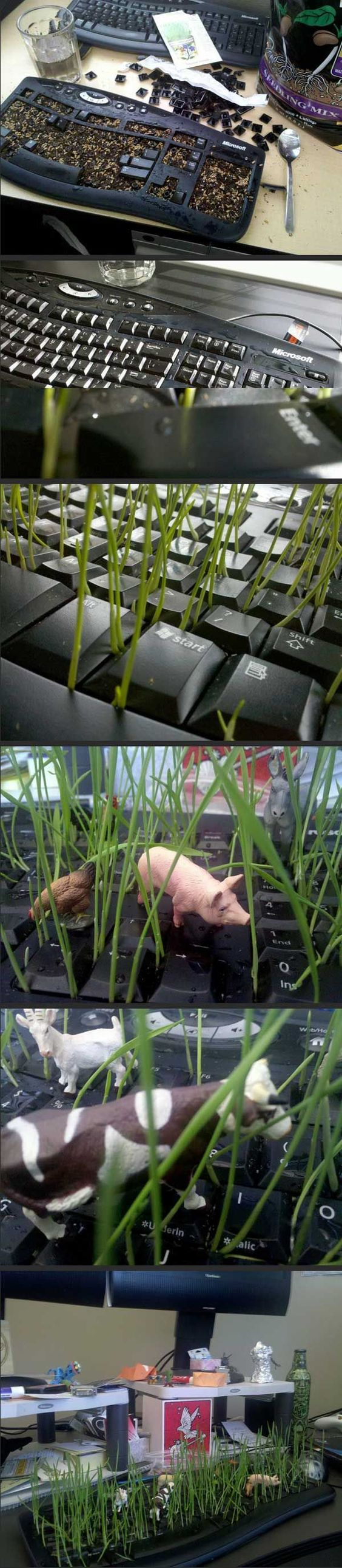 When my co-worker goes on vacation... Grow grass in his keyboard.