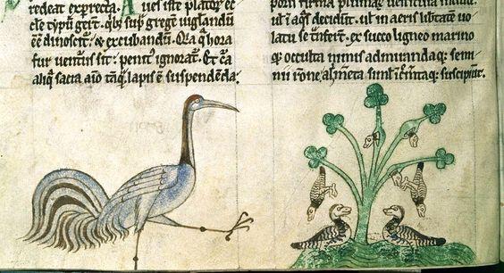 medieval barnacle tree - Szukaj w Google