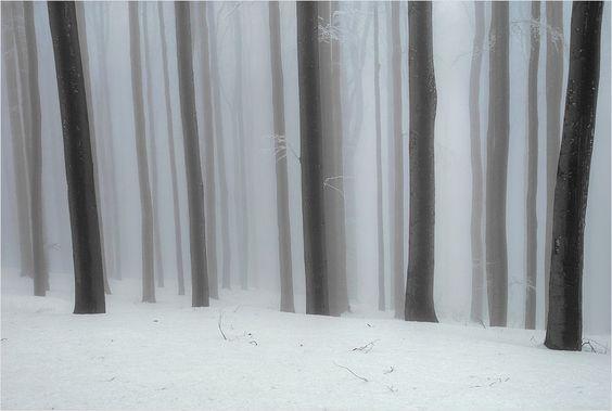 Nebel im Buchenwald, Wienerwald