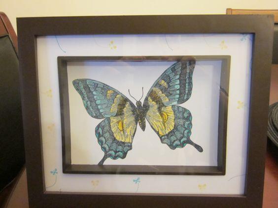 swallowtail frame