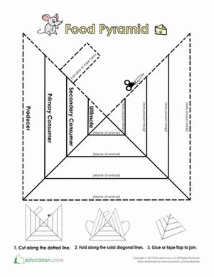 Trophic Level Pyramid   Trophic Level, Food Pyramid and Worksheets