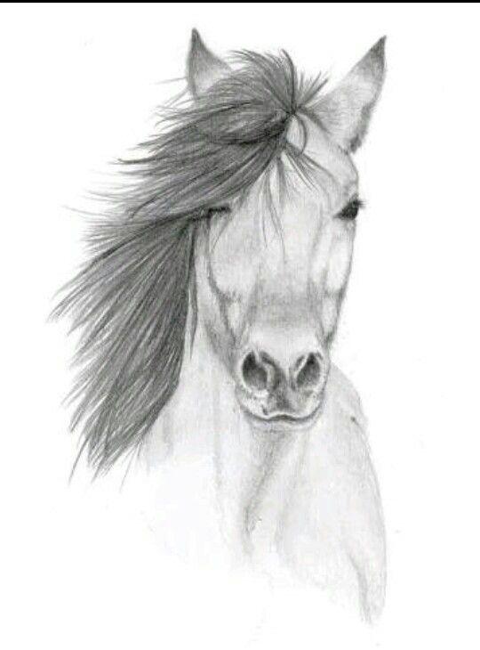 Pencil Art Horse Pencil Drawing Images