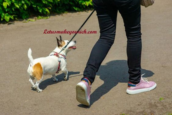 There are many health benefits of owning a pet. They can increase opportunities to exercise, get outside, and socialize. Regular walking or playing with pets can decrease blood pressure, cholesterol levels, and triglyceride levels. Pets can help manage loneliness and depression by giving us companionship.