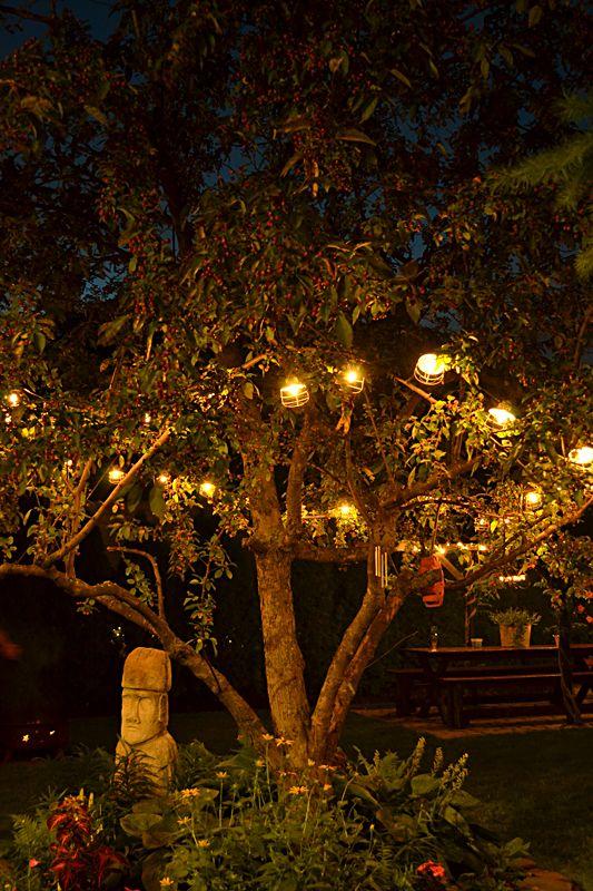 Night garden starry nights and backyards on pinterest for Landscaping rocks buffalo ny