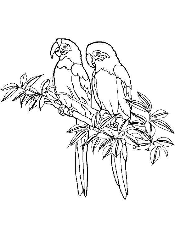 Un joli couple de perroquet dessin colorier - Dessins de perroquets ...