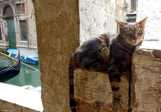 Venetian cat: