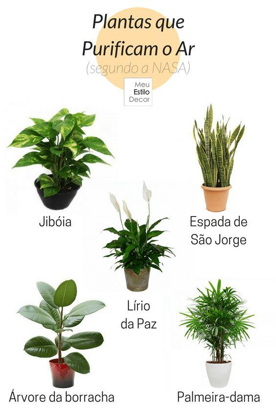 5 Motivos para Decorar com Plantas • Segundo a NASA, as plantas são capazes de filtrar substâncias poluentes como benzeno e amoníaco e purificar o ar dos ambientes.