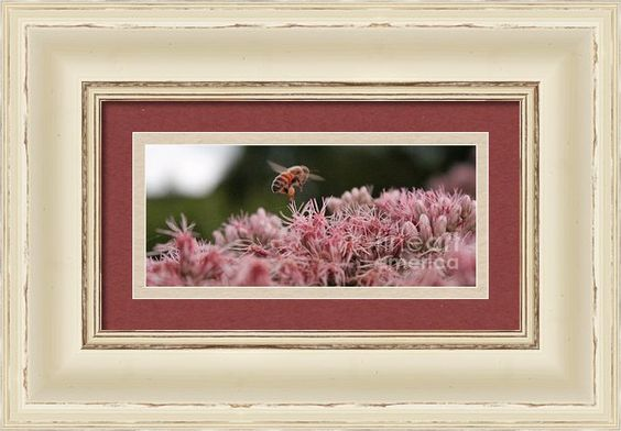 The Worker Bee Framed Print By Megan Campbell