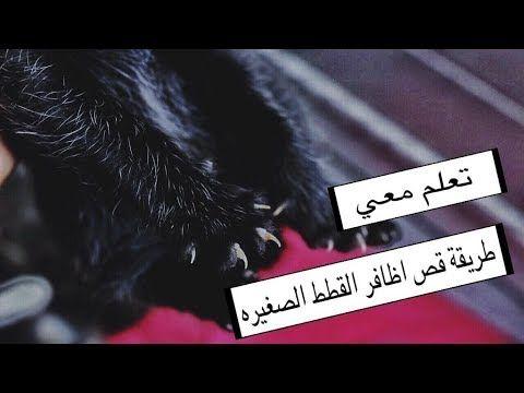طريقة قص اظافر القطط الكبيره الصغيره بشكل الصحيح الاعتناء بالقطط الصغيره Mohamed Vlog Youtube Movie Posters Movies Poster
