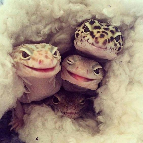 笑う三匹のかわいいトカゲの壁紙