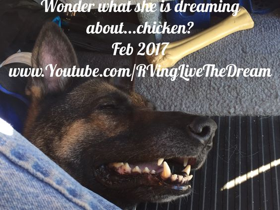 #napping #RVLife #boondocking #Gsd #RVingLiveTheDream  #RVingwithdogs