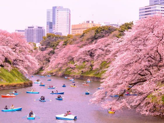 Notey Labs Digital Solutions For Businesses Cherry Blossom Japan Japan Travel Japan Travel Guide