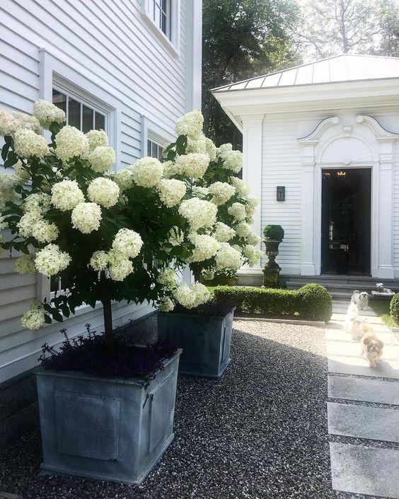"1,871 aprecieri, 59 comentarii - Robert Couturier (@robertcouturier58) pe Instagram: ""Perfect day... warm and not hot, Hydrangeas blooming, puppies running #kentconnecticut #hydrangeas…"""