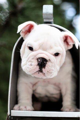 6 puppies that will make you smile, click the pic to see all