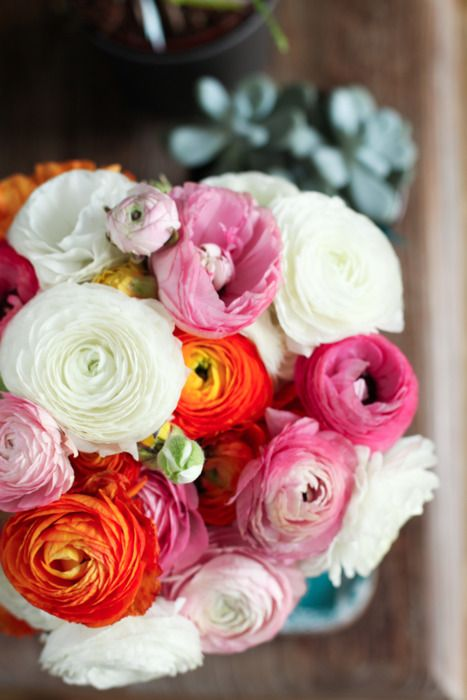 Ranunculas-i want these EVERYWHERE at my wedding. this is my favorite flower: Favorite Flowers, Flowers Flowers, Wedding Flowers, Pretty Flowers, Ranunculus Flowers, Ranunculus Bouquet